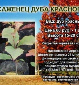 Саженцы хвойных, лиственных и плодовых