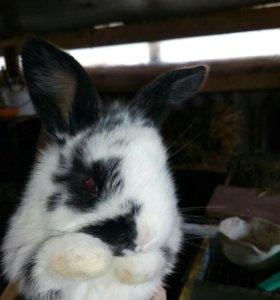 Крольчата мясные