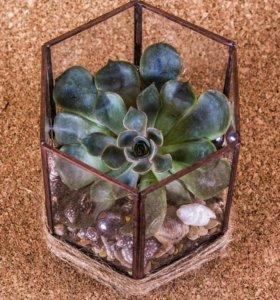 Флорариум