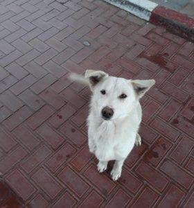 Бесплатно собака