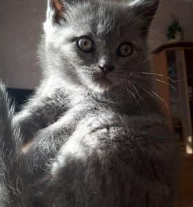 Кошечка страйт