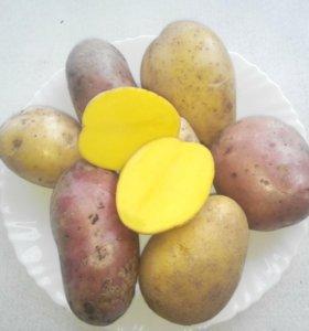 Отличная Картошка