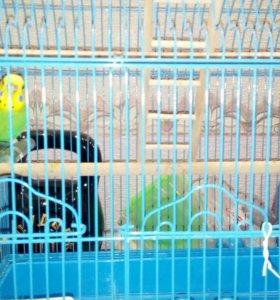 Волнистый попугай с клеткой
