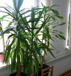 Растения для коттеджа