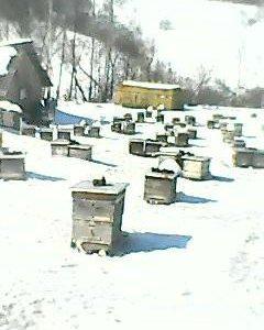 Пакеты пчёл тадан и рут