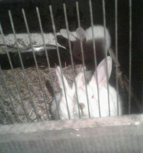 Кролики от месяца