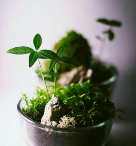 Растения в кочке Вабикуса