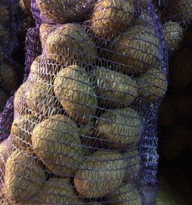Картофель Коломна