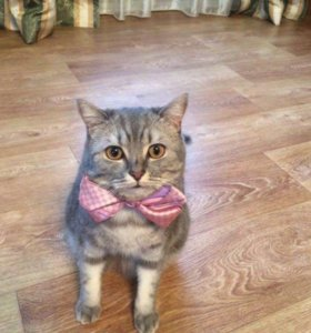 Отдадим кота Кекса