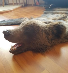 Чучило медведя