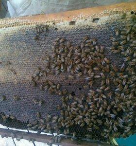 Мёд. Пчелопродукты