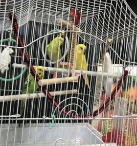 Попугаи с клеткой и жердой