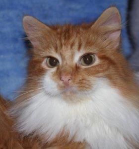 Котенок в добрые руки Пиксель, кот в дар