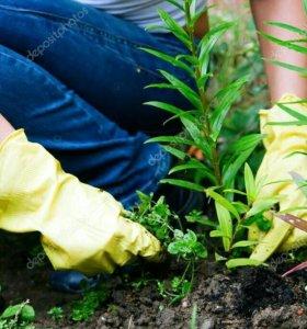 Про полка травы , выкопать фундамент и траншей,