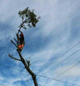 Спил, удаление любых трудных деревьев по частям.