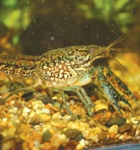 Аквариумные раки, рыбки и растения
