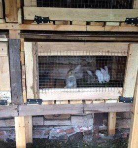 Кролики,Клетки
