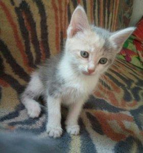 Котята от крысоловной кошки