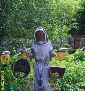 Пчелопакеты,отводки,матки