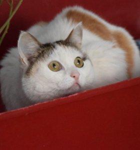 Кошка Тэона