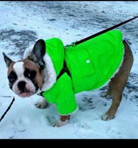 Курточка новая на собачку!
