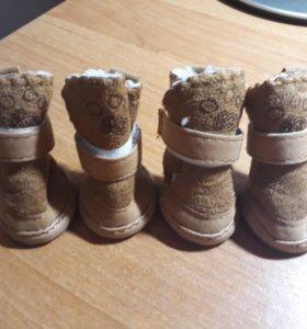 Зимние ботинки для собак 🐕