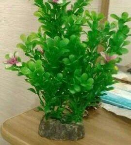 Продам растение