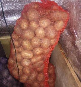 Картофель деревенский, морковь, Свекла