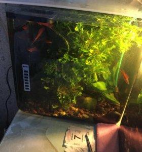 Рыбки меченосцы красные и зеленные