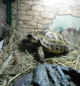 Сухопутгая черепаха с террариумом