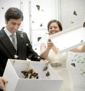 Свадьба - живые бабочки