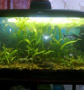 аквариум 200л.