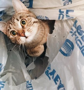 Котейка очень ищет дом