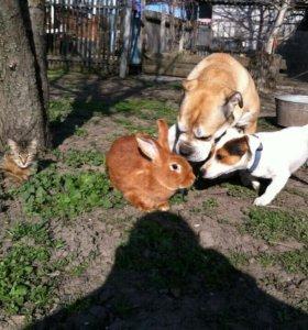 Кролики чистопородные НЗК