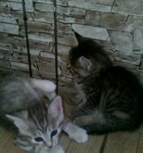 Милые котята ждут своих хозяев!