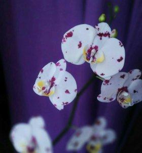 Орхидея фаленопсис ручной работы