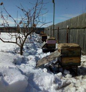 Пчелы в ульях Рута