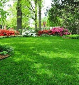 Сад, благоустройство, газон.