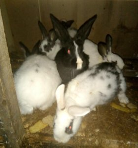 Крольчата.