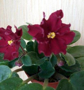 растения комнатные домашние