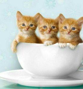 Возьму рыжего котенка