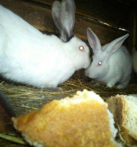 Кролики 5 штук