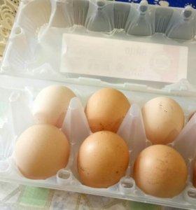 Свойское яйцо, куриное