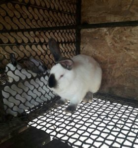 Кролики4-5 месяцев