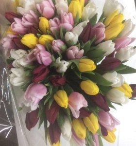 Луковицы тюльпанов в теплицы и на дачи