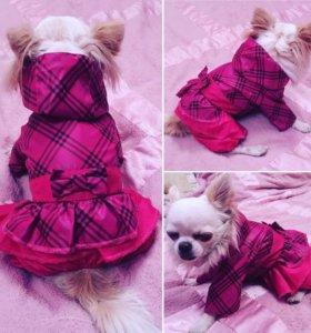 🐶🎀 Новая одежда для собак  «Кокетка»