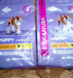 Eukanuba для щенков средних пород 800 г