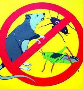 Уничтожение насекомых Дезинсекция Дератизация