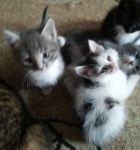3кошечки 1 котик беленький с пятнышками