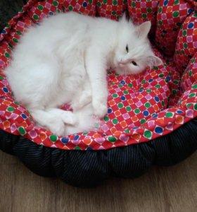 Лежак для кошек и маленьких собак